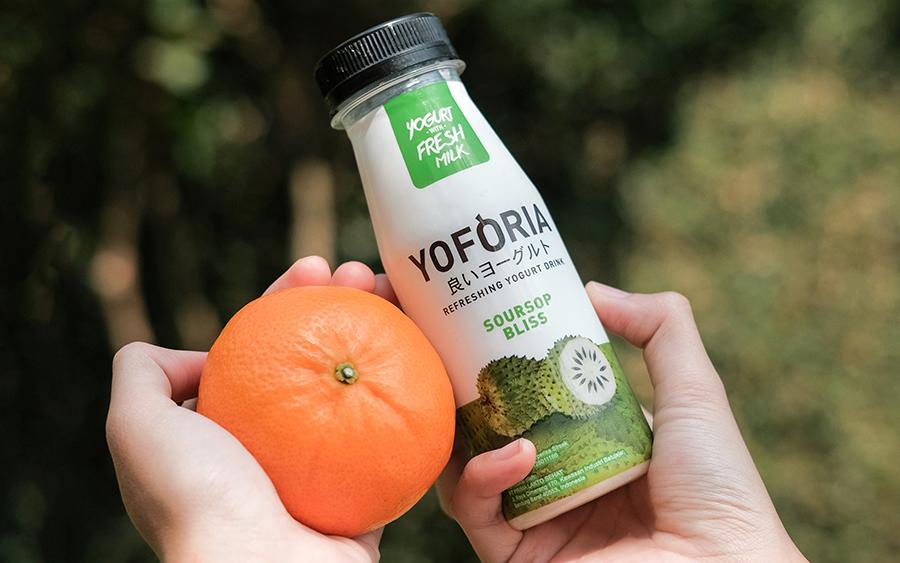 Yoforia Fresh Yogurt